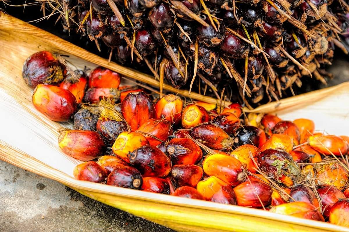 ist palmöl krebserregend